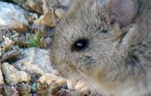 Biodiversidad-andina