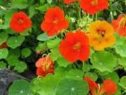 flores-300x226